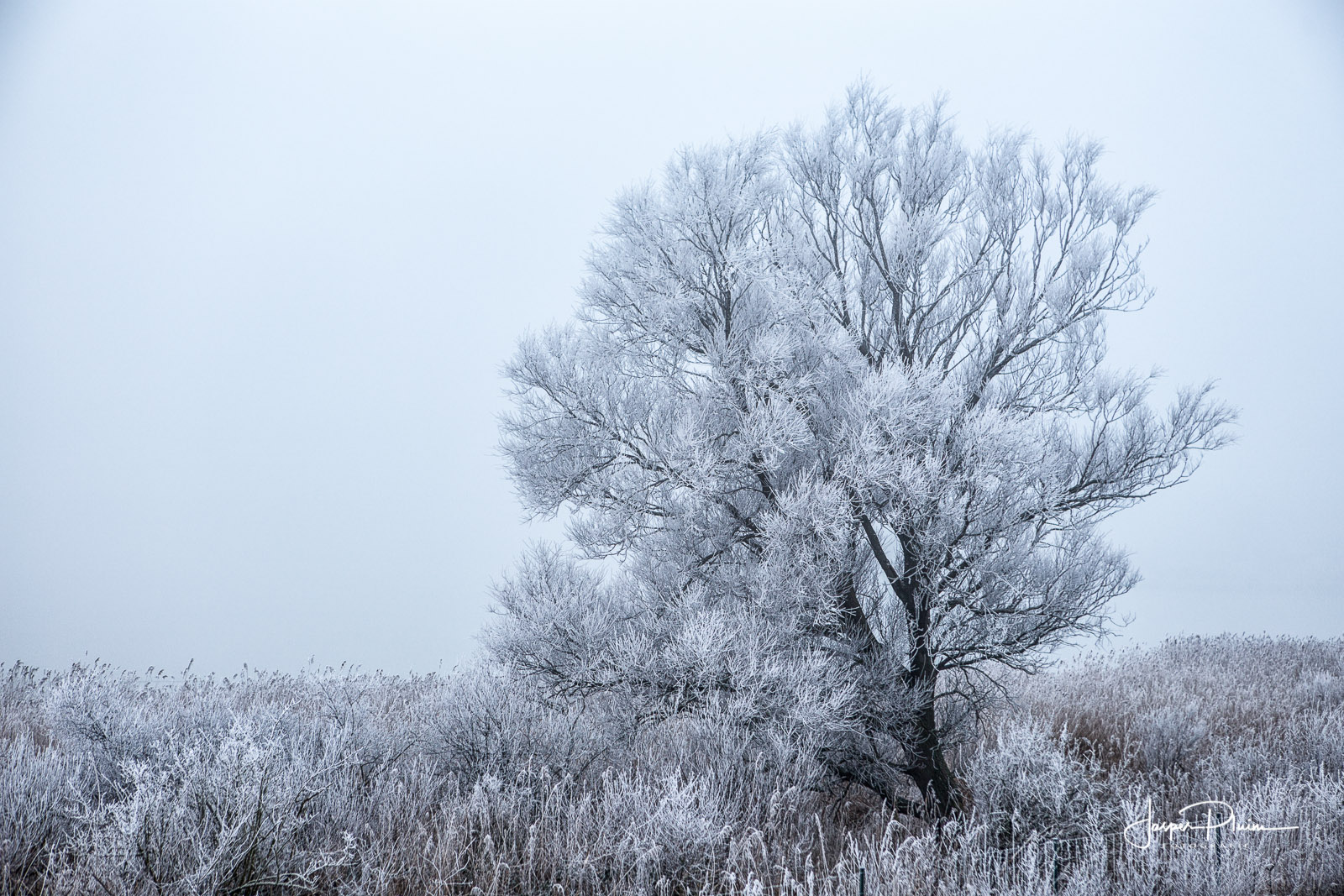 Frozen Fog Oostvaardersplassen